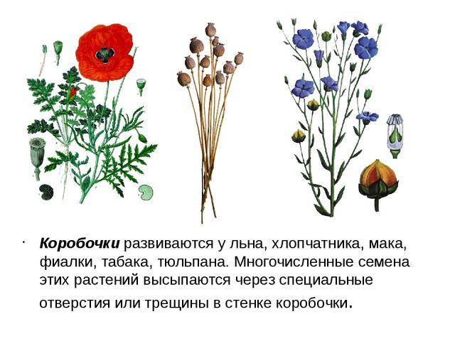 Коробочки развиваются у льна, хлопчатника, мака, фиалки, табака, тюльпана. Мн...