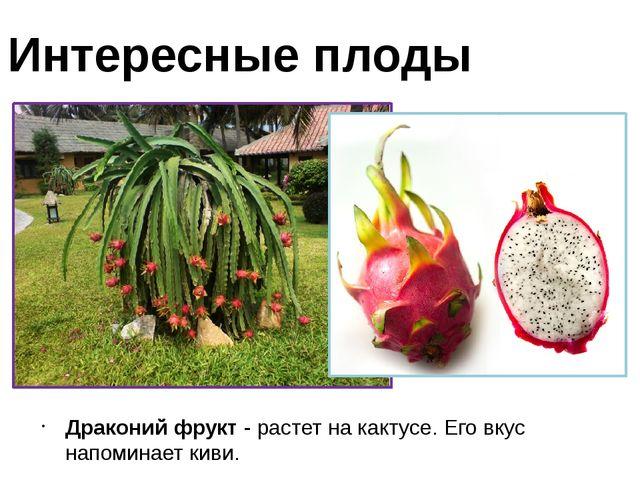 Драконий фрукт - растет на кактусе. Его вкус напоминает киви. Интересные плоды