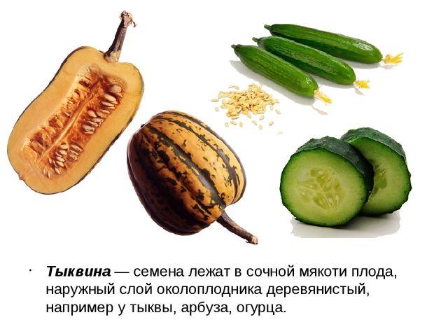 Тыквина — семена лежат в сочной мякоти плода, наружный слой околоплодника дер...