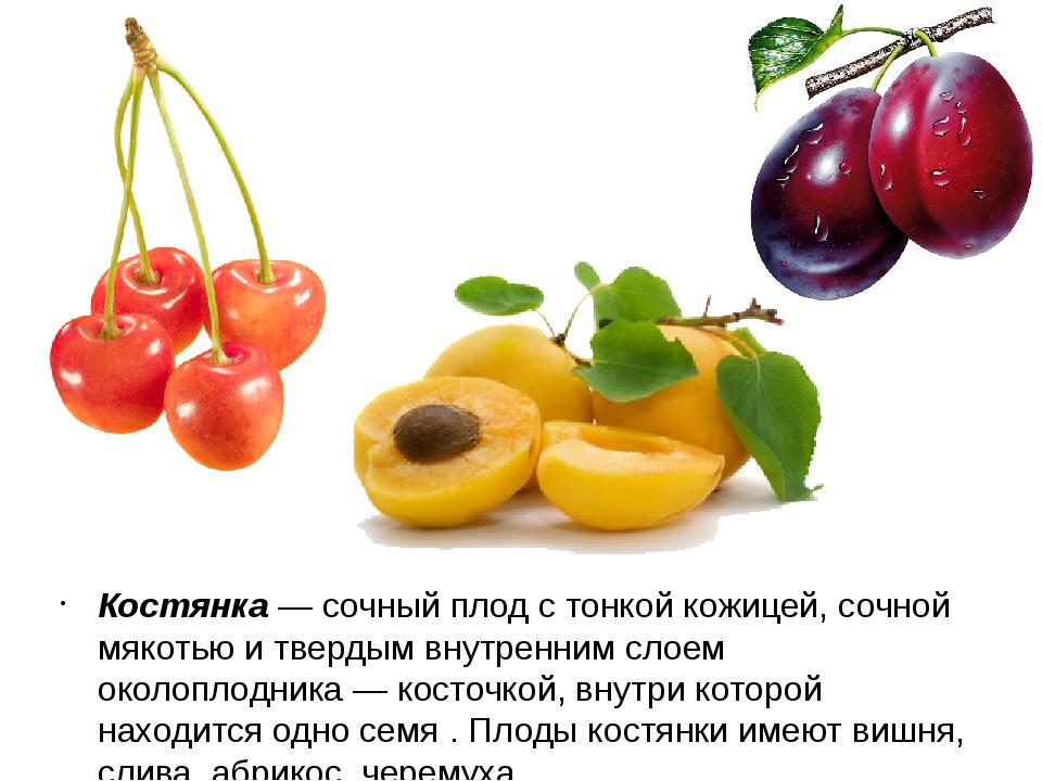 Костянка — сочный плод с тонкой кожицей, сочной мякотью и твердым внутренним...