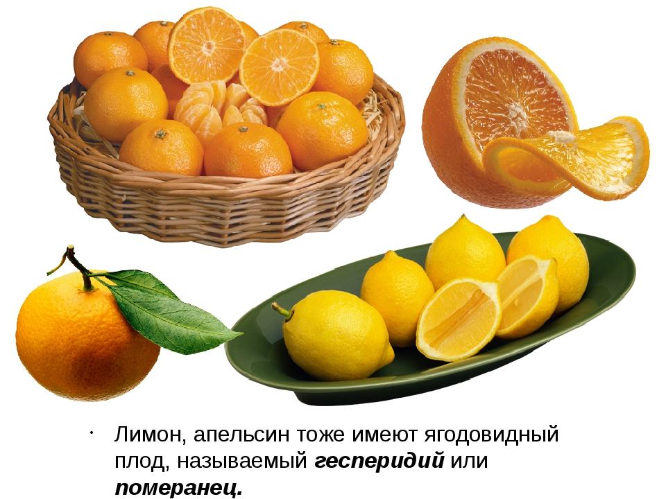 Лимон, апельсин тоже имеют ягодовидный плод, называемый гесперидий или помера...