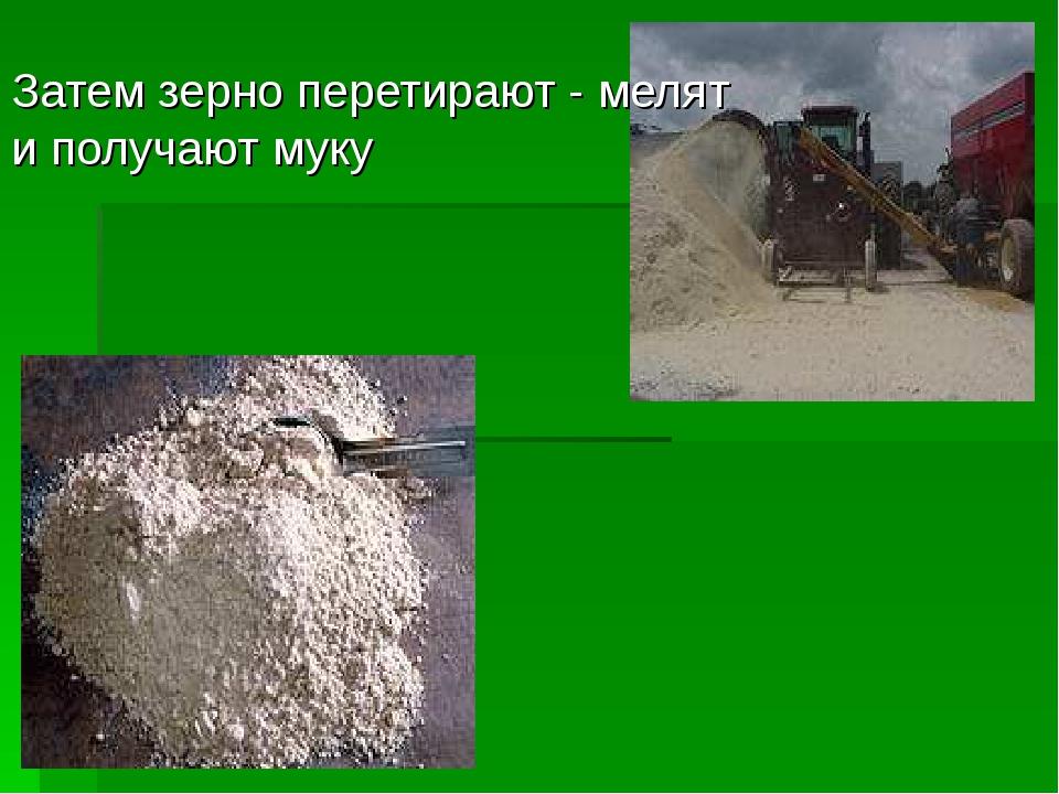 Затем зерно перетирают - мелят и получают муку
