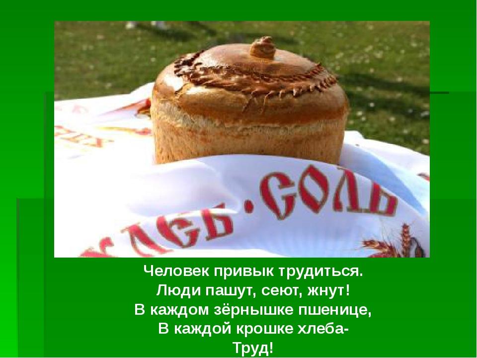 Человек привык трудиться. Люди пашут, сеют, жнут! В каждом зёрнышке пшенице,...