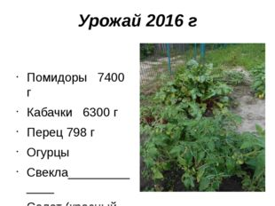 Урожай 2016 г Помидоры 7400 г Кабачки 6300 г Перец 798 г Огурцы Свекла_______