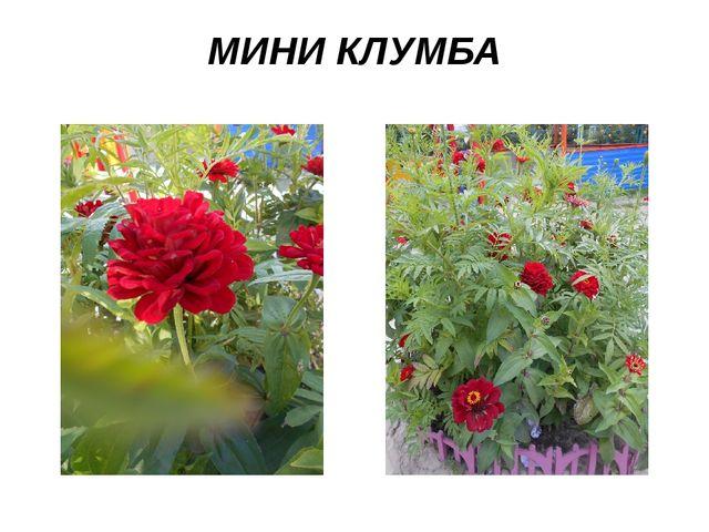 МИНИ КЛУМБА
