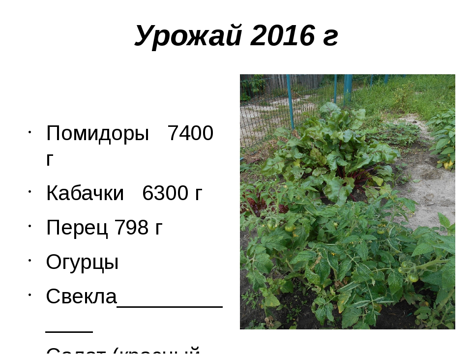 Урожай 2016 г Помидоры 7400 г Кабачки 6300 г Перец 798 г Огурцы Свекла_______...