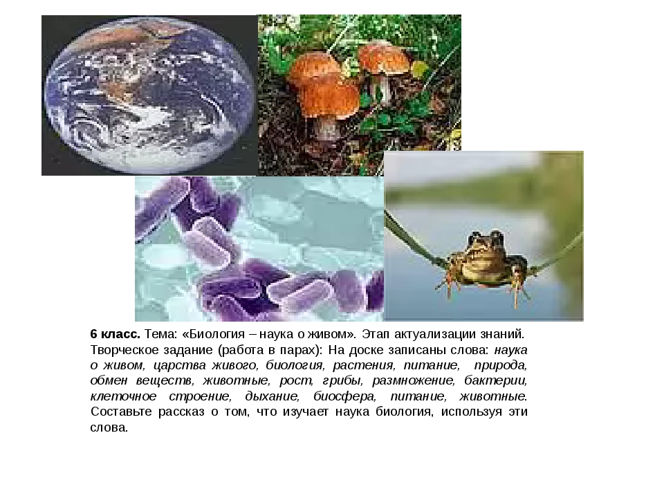 6 класс. Тема: «Биология – наука о живом». Этап актуализации знаний. Творческ...