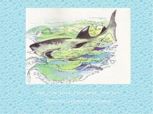 Вдруг с палубы кто-то крикнул: «Акула!». Акула плыла прямо на мальчиков.