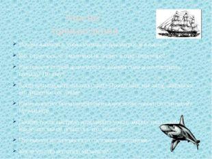 Почему капитан устроил купальню для матросов в парусе? Как случилось, что мал