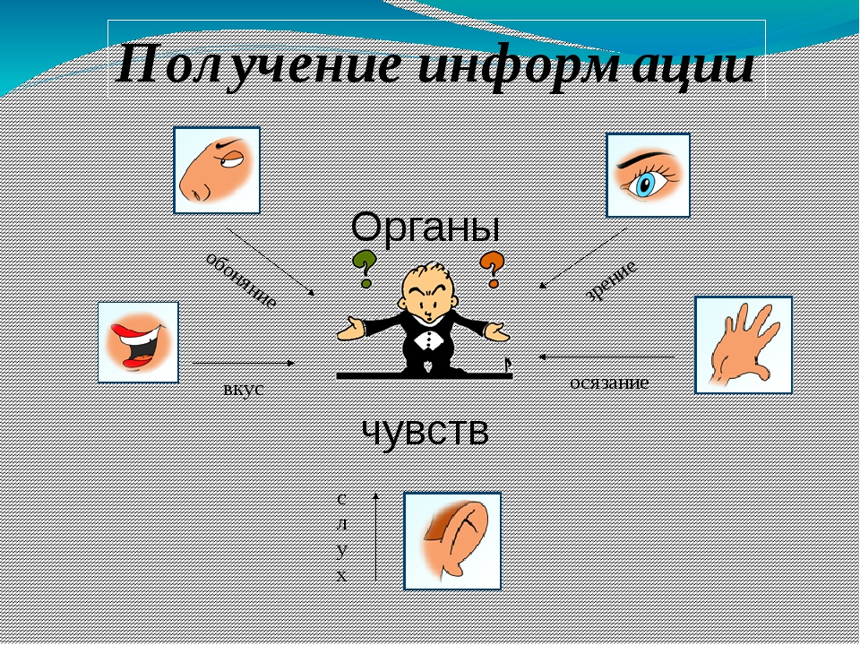 Органы чувств обоняние зрение осязание слух вкус Получение информации
