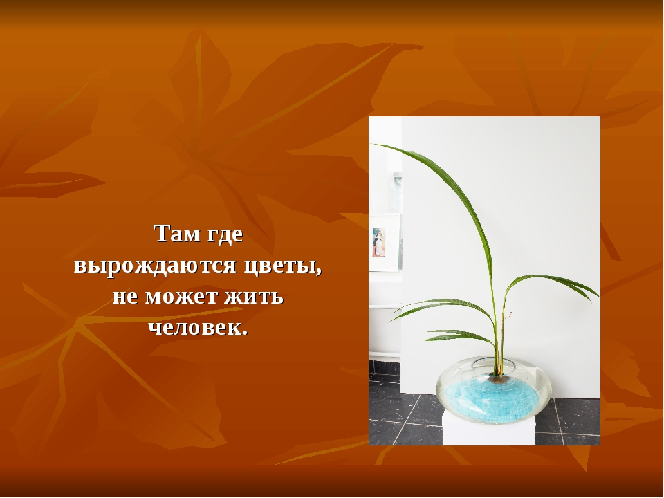 Там где вырождаются цветы, не может жить человек.