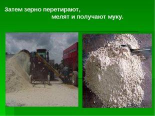 Затем зерно перетирают, мелят и получают муку.