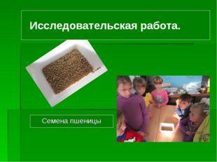 Исследовательская работа. Семена пшеницы