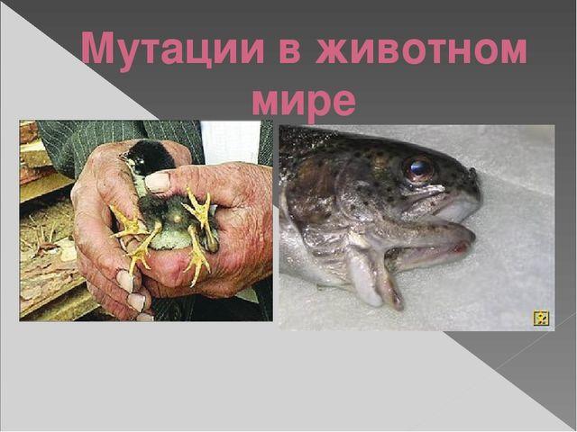 Мутации в животном мире