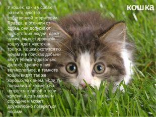 кошка У кошек, как и у собак развито чувство собственной территории. Правда,