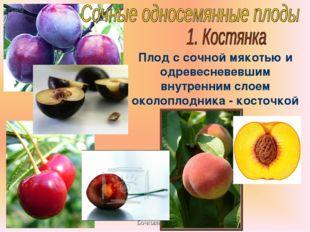 Бочкова И.А. Плод с сочной мякотью и одревесневевшим внутренним слоем околопл