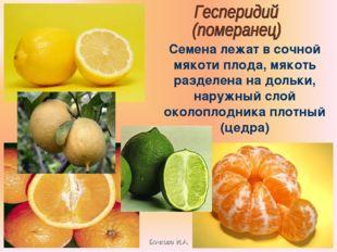 Бочкова И.А. Семена лежат в сочной мякоти плода, мякоть разделена на дольки,