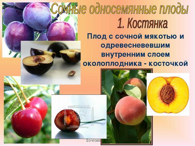 Бочкова И.А. Плод с сочной мякотью и одревесневевшим внутренним слоем околопл...