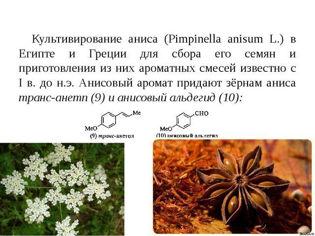 Культивирование аниса (Pimpinella anisum L.) в Египте и Греции для сбора его...