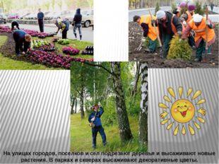 На улицах городов, поселков и сел подрезают деревья и высаживают новые растен