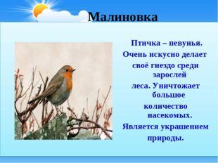 Малиновка Птичка – певунья. Очень искусно делает своё гнездо среди зарослей л