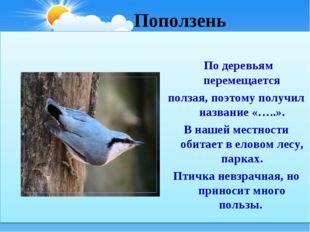 Поползень По деревьям перемещается ползая, поэтому получил название «…..». В