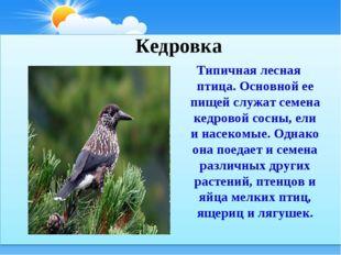 Типичная лесная птица. Основной ее пищей служат семена кедровой сосны, ели и