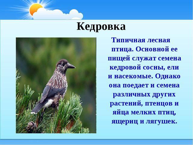 Типичная лесная птица. Основной ее пищей служат семена кедровой сосны, ели и...