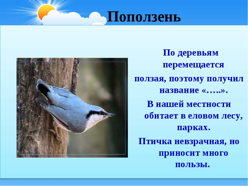 Поползень По деревьям перемещается ползая, поэтому получил название «…..». В...