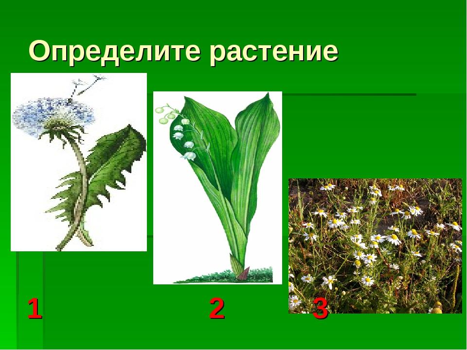 Определите растение 1 2 3