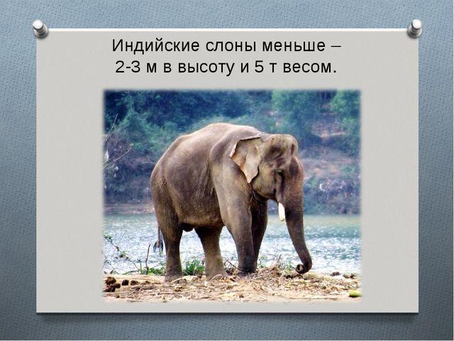Индийские слоны меньше – 2-3 м в высоту и 5 т весом.