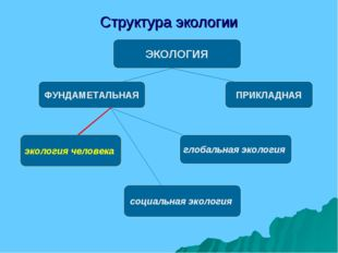 Структура экологии ЭКОЛОГИЯ ФУНДАМЕТАЛЬНАЯ ПРИКЛАДНАЯ экология человека социа