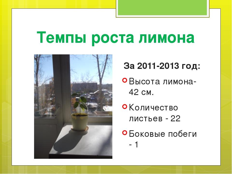 Темпы роста лимона За 2011-2013 год: Высота лимона- 42 см. Количество листьев...
