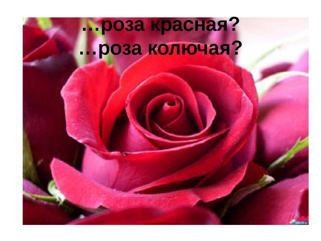 …роза красная? …роза колючая?