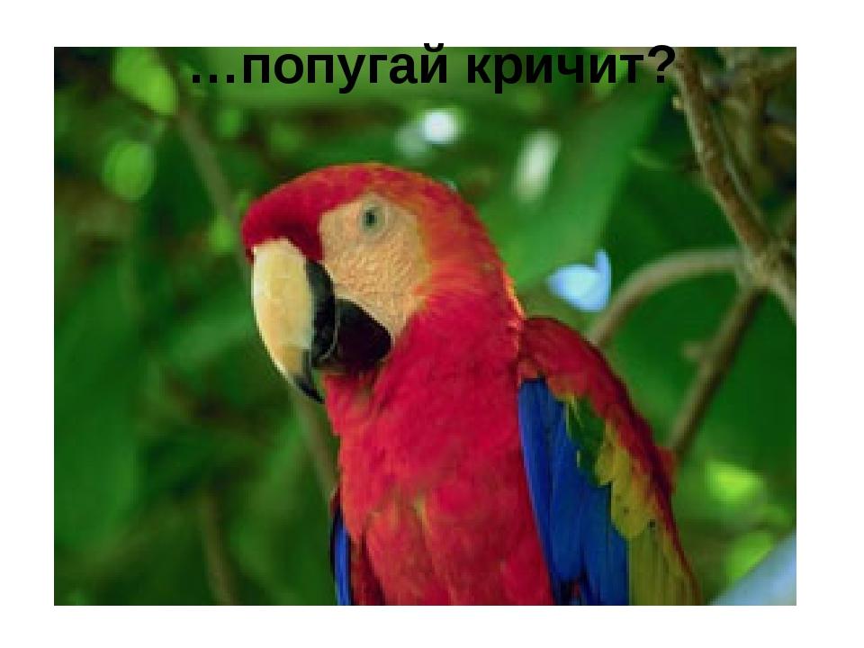 …попугай кричит?