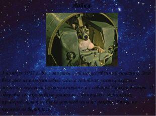 Лайка. 3 ноября 1957 г. Был запущен 2-ой искусственный спутник. Это был уже н