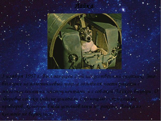 Лайка. 3 ноября 1957 г. Был запущен 2-ой искусственный спутник. Это был уже н...