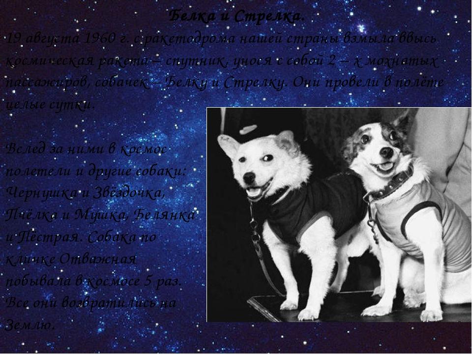 Белка и Стрелка. 19 августа 1960 г. с ракетодрома нашей страны взмыла ввысь к...