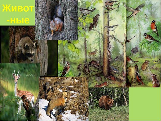 Живот-ные леса