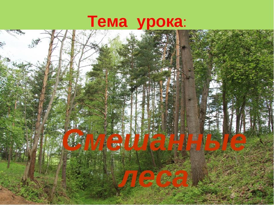 Тема урока: Смешанные леса