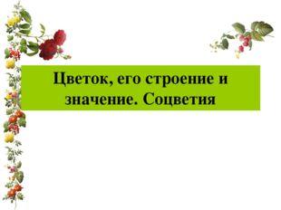 Цветок, его строение и значение. Соцветия