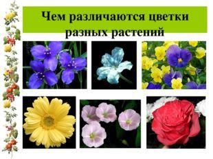 Чем различаются цветки разных растений