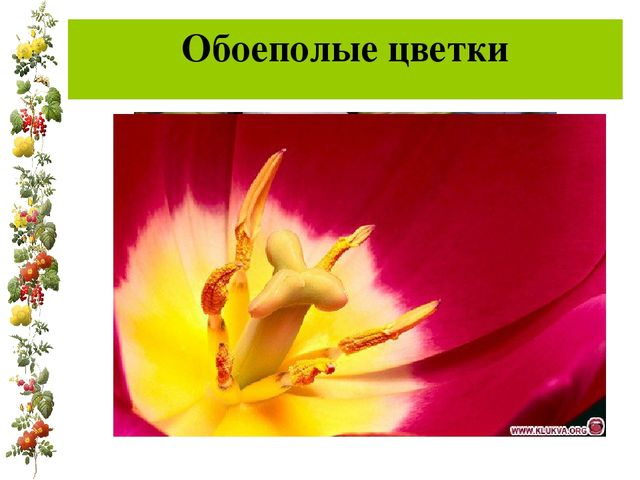 Обоеполые цветки