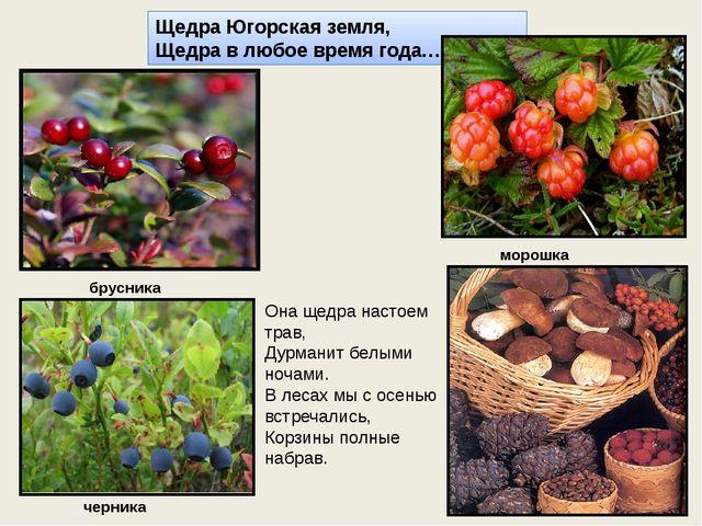 Щедра Югорская земля, Щедра в любое время года… Она щедра настоем трав, Дурма...