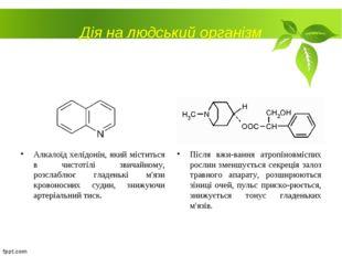 Дія на людський організм Алкалоїд хелідонін, який міститься в чистотілі звича