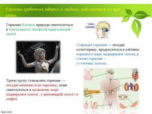 Гормони білкової природи синтезуються в гіпоталамусі, гіпофізі й підшлунковій