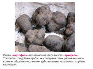 Слово «картофель» произошло от итальянского «трюфель». Трюфели - съедобные гр