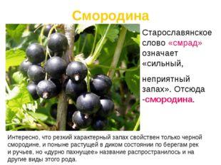 Интересно, что резкий характерныйзапах свойствен только черной смородине,и