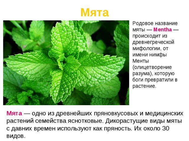 Мята Мята — одно из древнейших пряновкусовых и медицинских растений семейства...