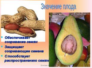 Бочкова И.А. Обеспечивает созревание семян Защищает созревающие семена Способ